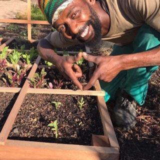 Square Foot gardening Humanitarian
