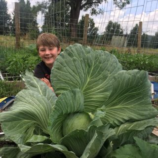 Square Foot Gardening boy with cabbage